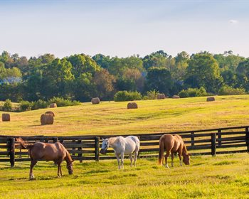 Find the Right Fencing for your Ranch