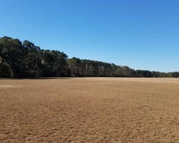 Pristine Irrigated Farm Land in Georgia