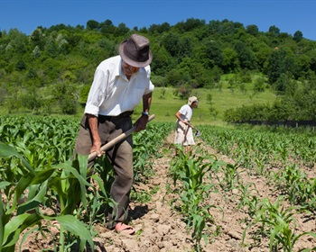 Pulse: Farms Should Brace for Negative Repercussions of Immigration Order