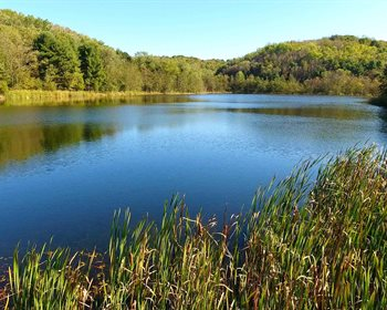 Showcase Auction: Diverse, 1,050 +/- Acre Timberland & Recreational Tract