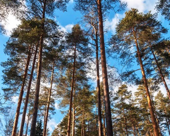 What You Need To Know About Forestry Genetics
