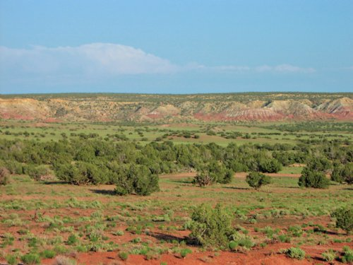 37 Acre Wilderness Ranch $179 Month : St. Johns : Apache County : Arizona