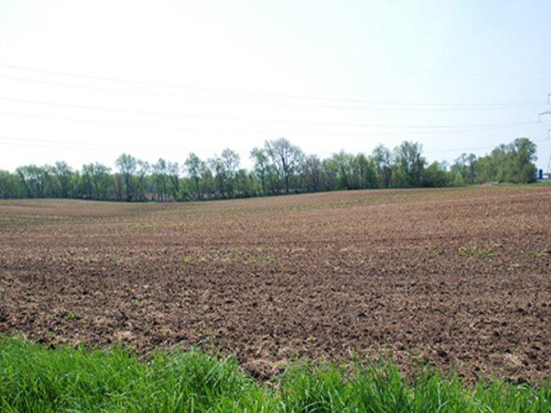 Real Estate Auction - 259+/- Acres : La Porte : La Porte County : Indiana