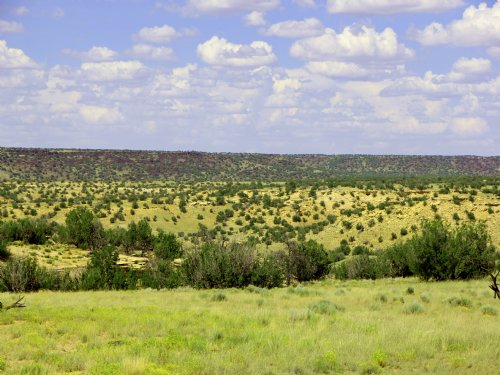 Quiet 37 Acre Wilderness Ranch : St. Johns : Apache County : Arizona