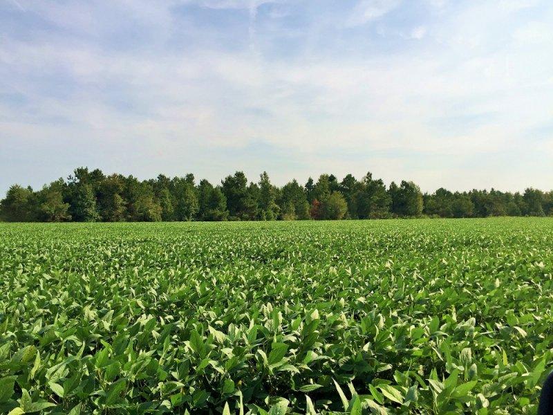 Kingstree Agricultural Homesite : Kingstree : Williamsburg County : South Carolina
