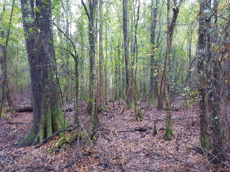 146 Acre Hunting Tract : Millen : Jenkins County : Georgia