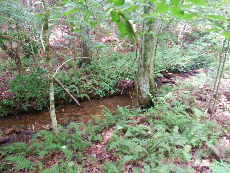 70 +/- Acres Timberland For Sale : Ranburne : Cleburne County : Alabama