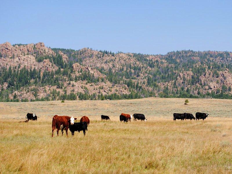 Deer Creek Ranch : Casper : Natrona County : Wyoming