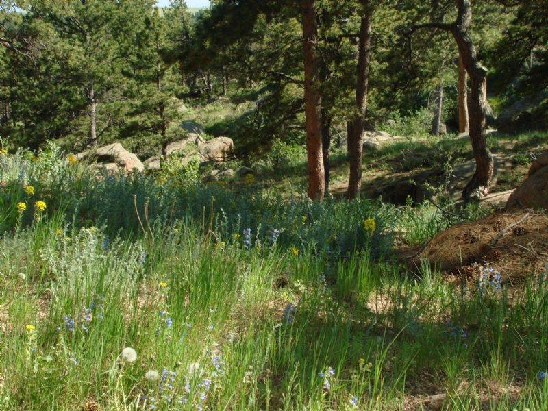 Granite Springs Lot 4 : Cheyenne : Laramie County : Wyoming