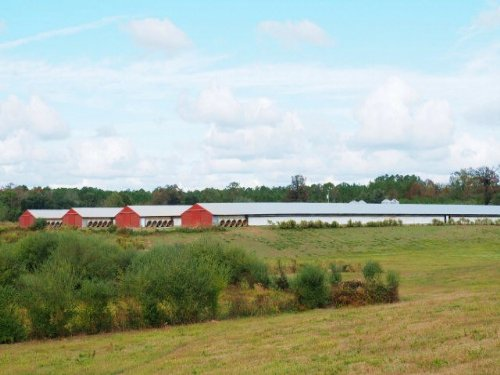 Mississippi Poultry Farm, Walthall : Sandy Hook : Walthall County : Mississippi