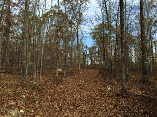 61.21 +/- Wooded Acres : Kingston : Floyd County : Georgia