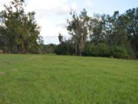 Williams Cattle Tract : Greensboro : Gadsden County : Florida