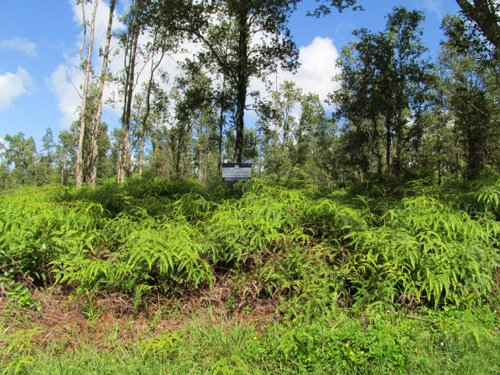 Nanawale Estates, Owner Financing : Pahoa : Hawaii County : Hawaii