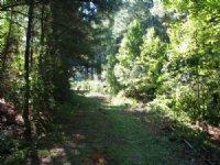 Shiloh Church Rd 84 : Frisco City : Monroe County : Alabama