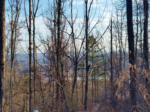 3.77 Acre Lot In Bayside : Bean Station : Grainger County : Tennessee