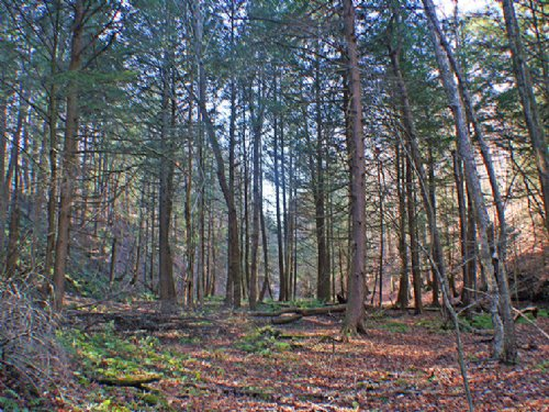Land Small Camp 52 Acres Creek : Charlotte : Chautauqua County : New York