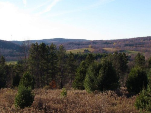 Land Bordering State Forest 23 Acre : Decatur : Otsego County : New York