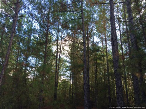 84 Acres Of Hunting Land : Monticello : Lawrence County : Mississippi