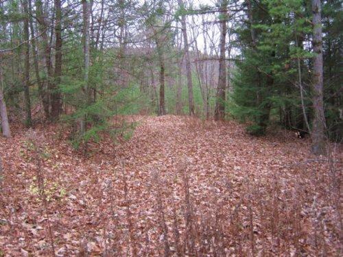 40 Acres Near Elmira Timber Hunting : Baldwin : Chemung County : New York