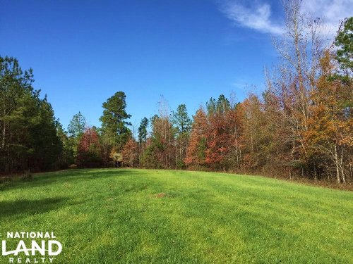 Hunting And Timber Investment : Sweet Water : Marengo County : Alabama