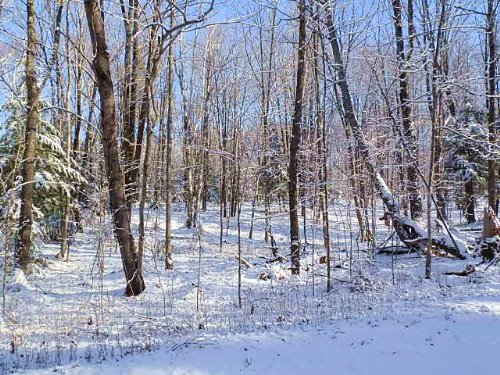 22 Acres On Squaw Creek : Fifield : Price County : Wisconsin