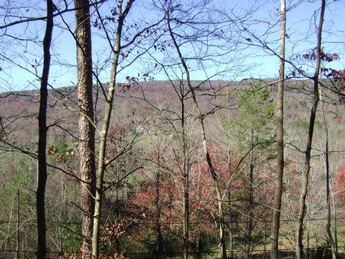 Wooded Lot In Great Neighboorhood : Dayton : Rhea County : Tennessee