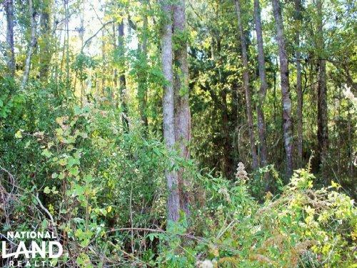 Private Recreational Homesite : White Oak : Camden County : Georgia