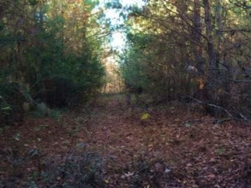 Hunting Land For Sale Louisville, M : Louisville : Winston County : Mississippi