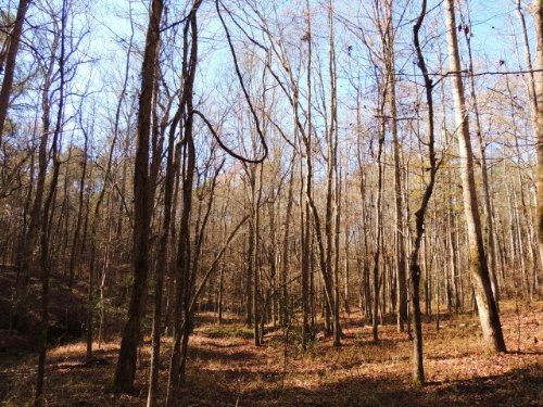 93.7 Ac Hwy 18 & Trammell Rd. : Pine Mountain : Meriwether County : Georgia