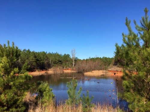 300 Acres Simpson Co. Mt Zion Road : Magee : Simpson County : Mississippi