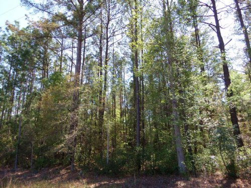 93 Acres Great Investment : Jesup : Wayne County : Georgia