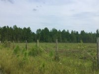 Cobb Creek Parcel 1 : Sanderson : Baker County : Florida