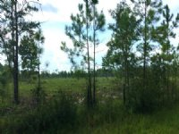 Cobb Creek Parcel 3 : Sanderson : Baker County : Florida