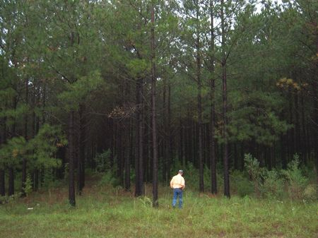 New Price On 32 Quiet Country Acres : Clayton : Barbour County : Alabama