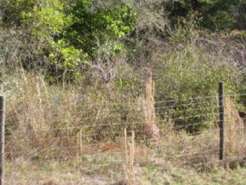 2 Acres  771140 : Old Town : Dixie County : Florida