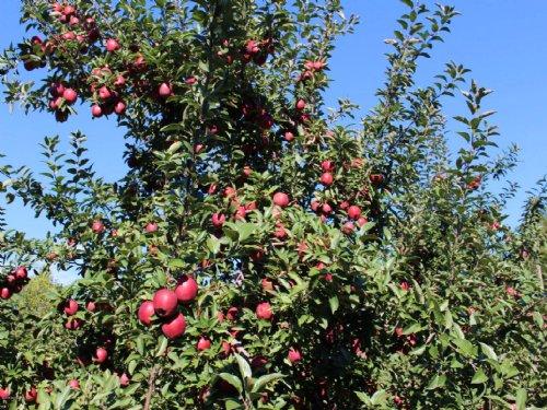 Variety Fruit Farm On 86 Acres : Hartford : Van Buren County : Michigan