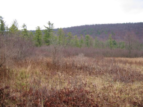 Hunting Land Near Ithaca 22 Acres : Danby : Tompkins County : New York