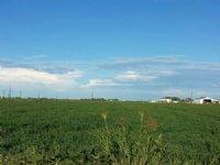 Rio Vista Ranch : Lamar : Prowers County : Colorado