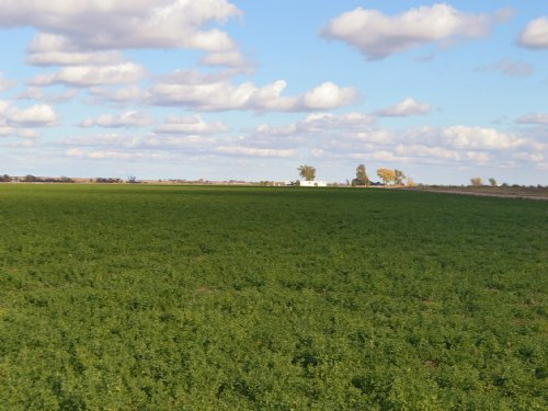Buffalo Irrigated Farm : Holly : Prowers County : Colorado