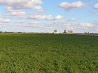 Buffalo Irrigated Farm : Holly : Prowers County : Colorado