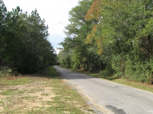 Hickory Grove Road 228 Acres : Lumberton : Pearl River County : Mississippi