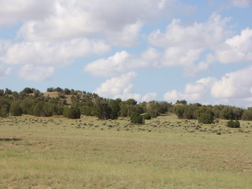 Az Wilderness Ranch $115 Mo. : Taylor : Navajo County : Arizona