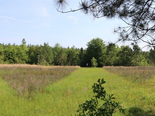 166 Acres In Lamar County In Lumber : Lumberton : Lamar County : Mississippi