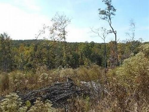 173.9 Acres In Montgomery County : Vaiden : Montgomery County : Mississippi