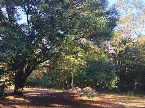 Pineview Lane Tract : Cottageville : Colleton County : South Carolina