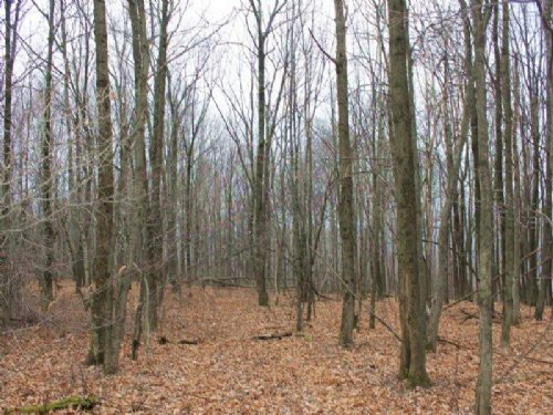 Land In The Adirondacks 32 Acres : Schuyler : Herkimer County : New York