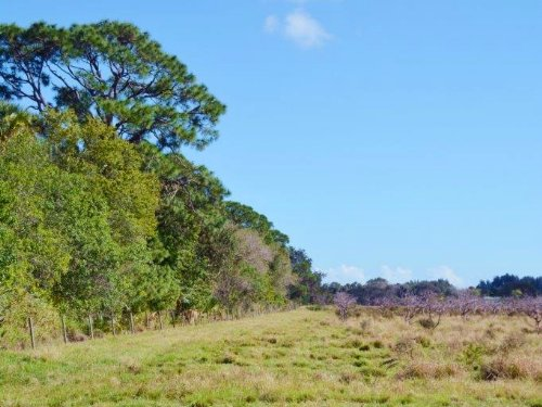 Johnston Road Acreage : Fort Pierce : St. Lucie County : Florida