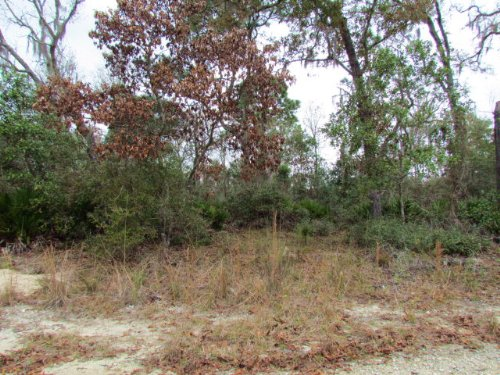 Reduced 5+ Acres 771203 : Chiefland : Levy County : Florida