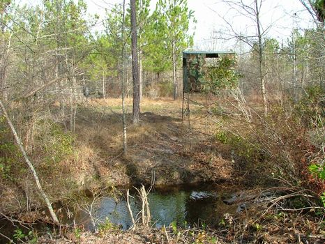 45 Acres of Prime Hunting- Privacy : Swainsboro : Emanuel County : Georgia