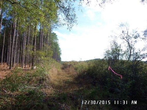 25 Acres On Owens Road : Odum : Wayne County : Georgia